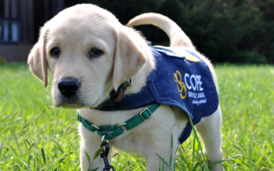 ZuZu one of five downtown retailers in Fashion Show to support COPE Service Dogs [video]