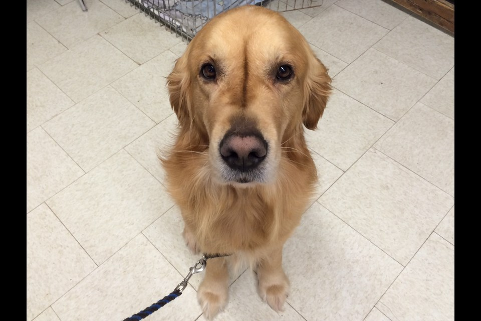 Canines in the Classroom does great work