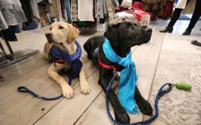 C.O.P.E Puppies spotted at ZuZu!